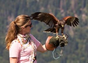 Erlebnistag als  Falkner: Nina und unser Harris Hawk Gomez.