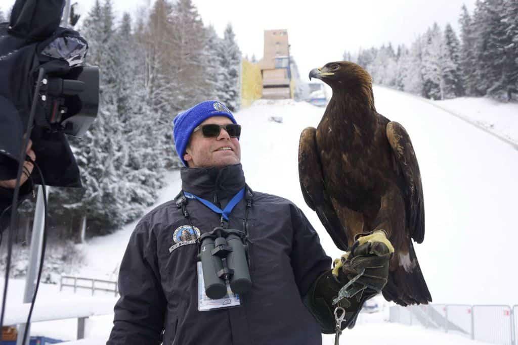 Falkner mit Adler von Greifvogelwarte Landskron am Kulm