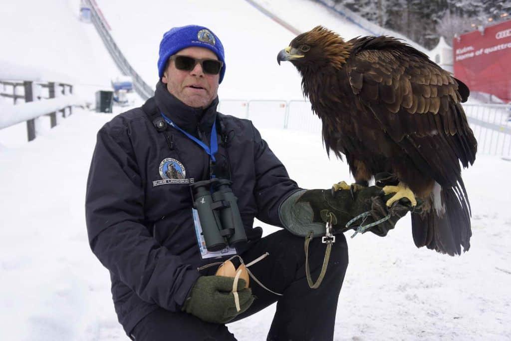 Adler mit Falkner Franz Schüttelkopf am Kulm - Flugschanze in Österreich