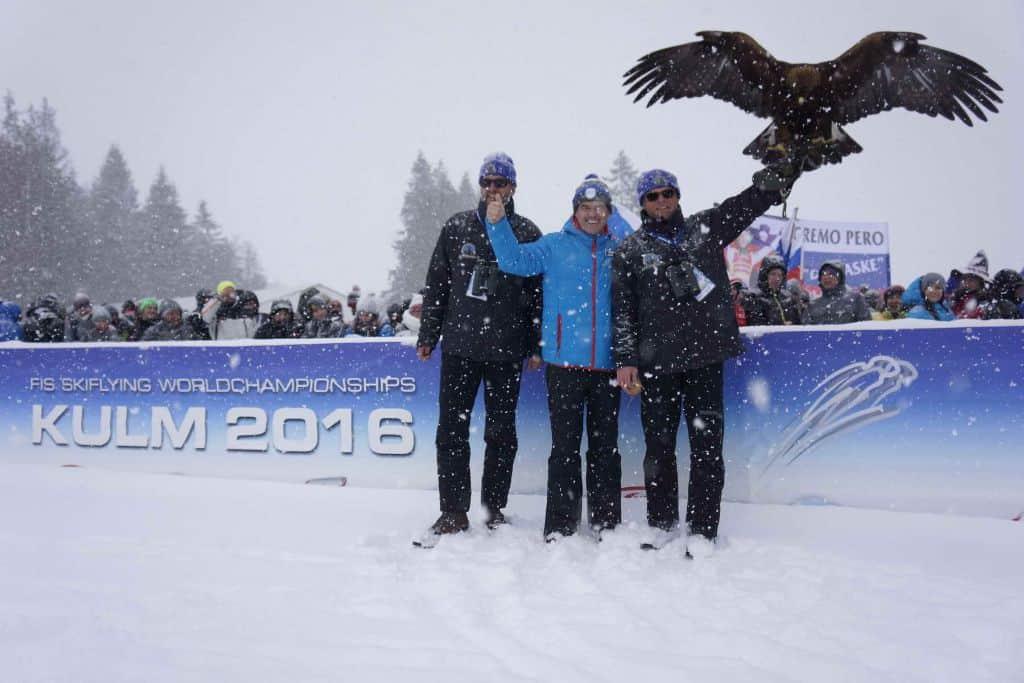 Falkner mit Adler am Kulm - Skiflugschanze in Österreich