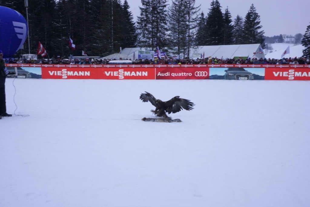 Adler auf Skisprungschanze Kulm Steiermark