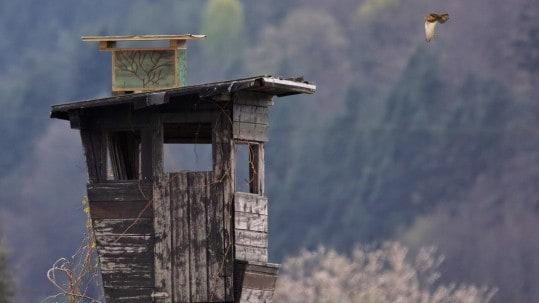 Nistkasten Nummer acht wurde auf einem Hochstand in der Nähe der Adler Arena Burg Landskron angebracht und hier sind bereits Turmfalken eingezogen. © Klaus Freithofer