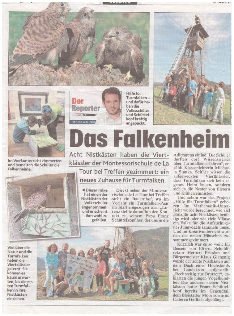 TurmfalkenNistkasten_Kronenzeitung