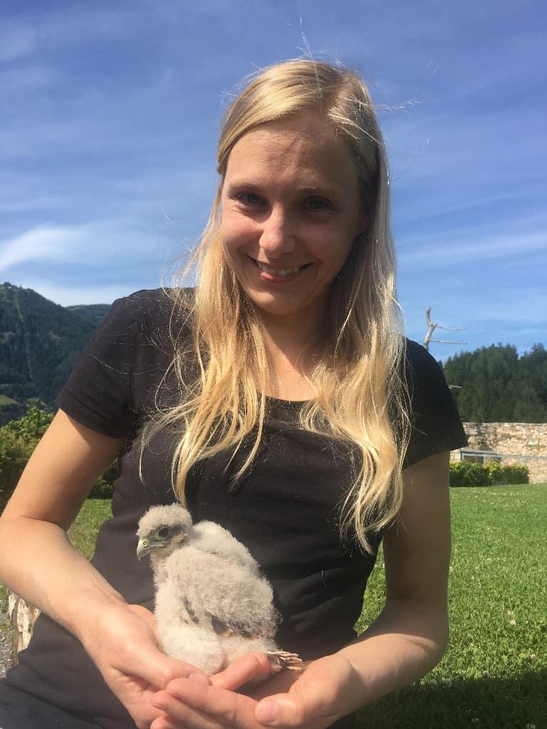 """Jenny Köfer aus Velden konnte """"ihren"""" Turmfalkennestling in der Pflegestation der Adler Arena besuchen. © Adler Arena"""