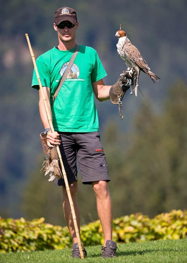 Wirkt sich das Tragen einer Haube positiv oder negativ auf den Stresslevel von Adlern und Falken aus? © Michael Rzepa