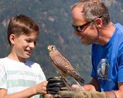 Worshop mit Falkner für Familien - Falknerworkshops Preise