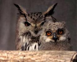 Greifvogelpark Uhus in Adlerarena bei Villach - Gruppenpreise