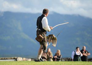 Falke auf Greifvogelwarte Landskron Nähe Villach am Ossiacher See in Kärnten