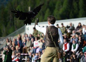 Impressionen von Greifvogelschau mit Falkner in Villach in Österreich