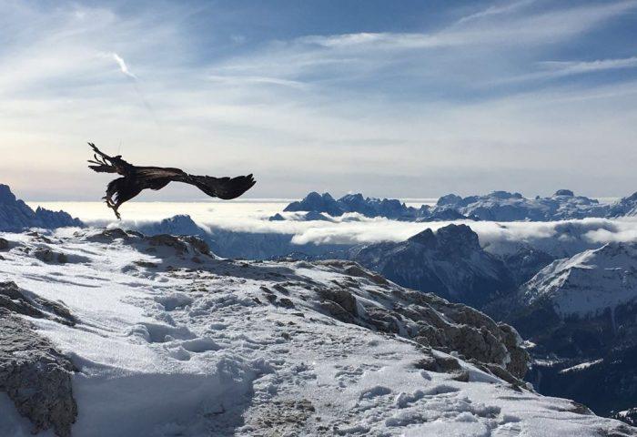 Adlerarena Steinadler bei Filmdreh für National Geographic Alpen Doku