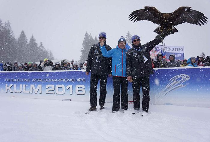 Adler von Greifvogelwarte Landskron bei ORF Skiflug-WM Kulm